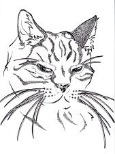 Kimble Kitty